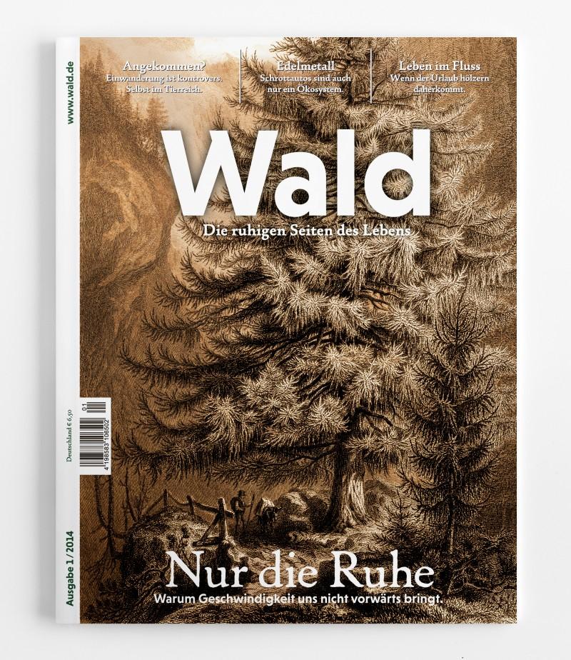 Wald #NUR DIE RUHE